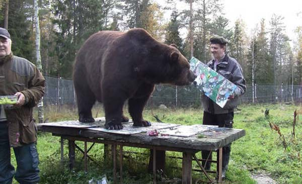 orphaned and amazingly talented animal painter juuso the bear 17 pictures 6