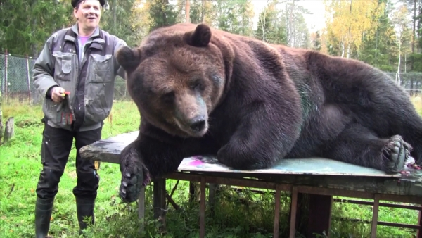 orphaned and amazingly talented animal painter juuso the bear 17 pictures 7