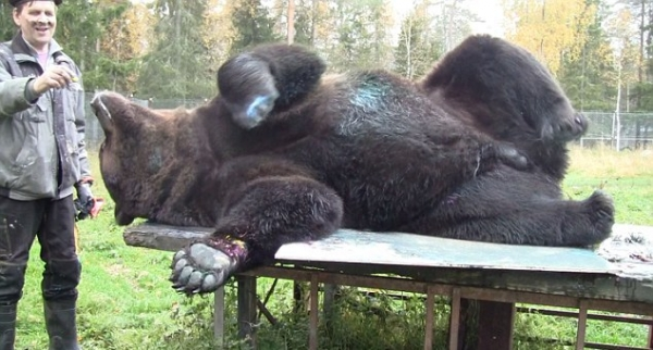 orphaned and amazingly talented animal painter juuso the bear 17 pictures 8