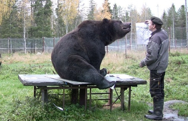orphaned and amazingly talented animal painter juuso the bear 17 pictures 9