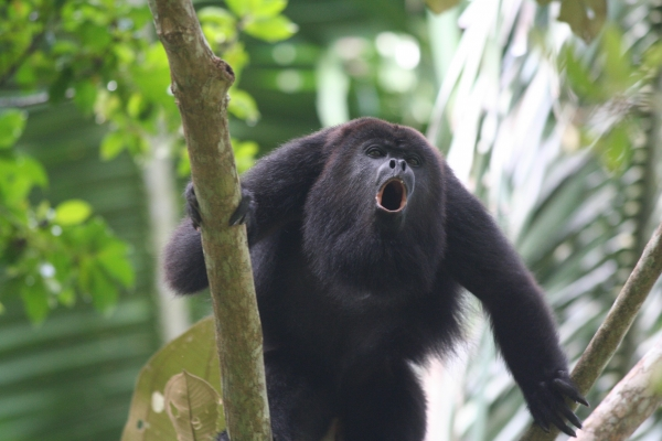 panama is a diverse place but these guys make it really special 10 pictures 3