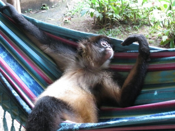 panama is a diverse place but these guys make it really special 10 pictures 7