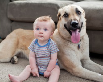 pet or baby 5