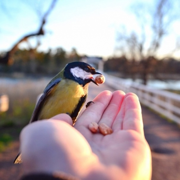 photographer that makes a sweet deal with wild animals 17 pictures 13