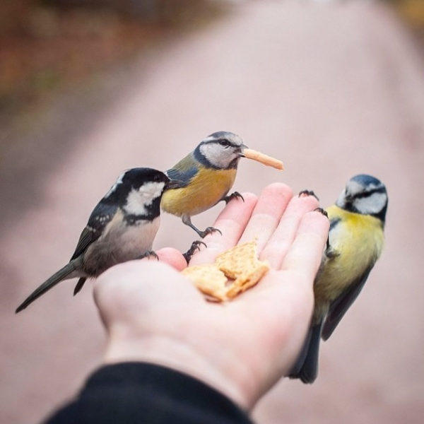 photographer that makes a sweet deal with wild animals 17 pictures 15
