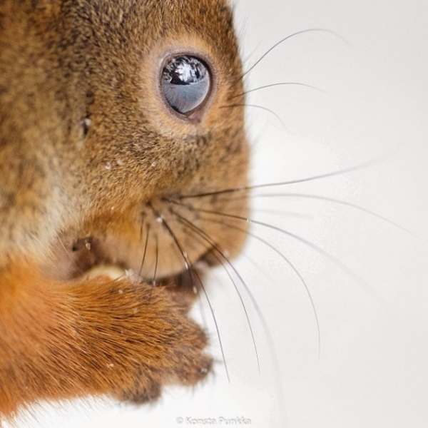 photographer that makes a sweet deal with wild animals 17 pictures 16