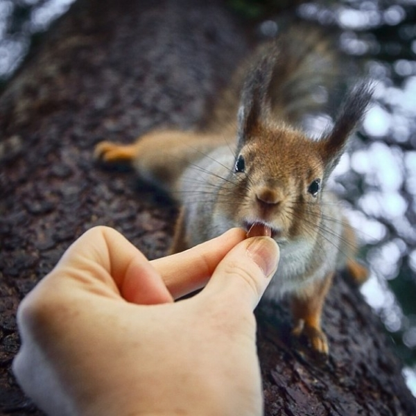 photographer that makes a sweet deal with wild animals 17 pictures 2