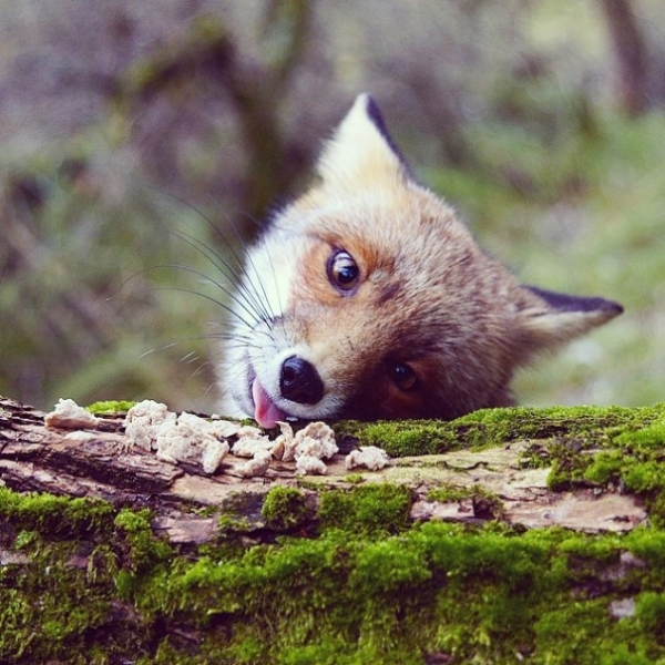 photographer that makes a sweet deal with wild animals 17 pictures 3