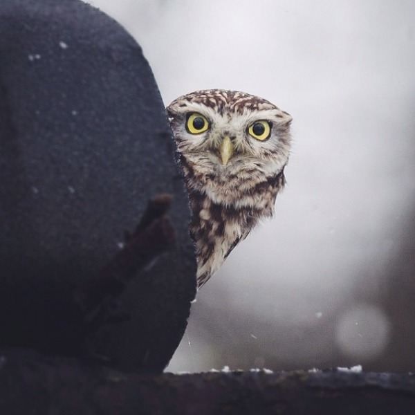photographer that makes a sweet deal with wild animals 17 pictures 4