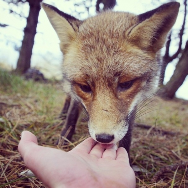 photographer that makes a sweet deal with wild animals 17 pictures 9