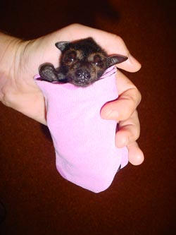 place where orphaned baby bats get second chance 12 pics 10