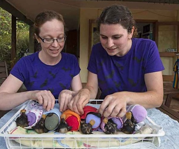 place where orphaned baby bats get second chance 12 pics 6