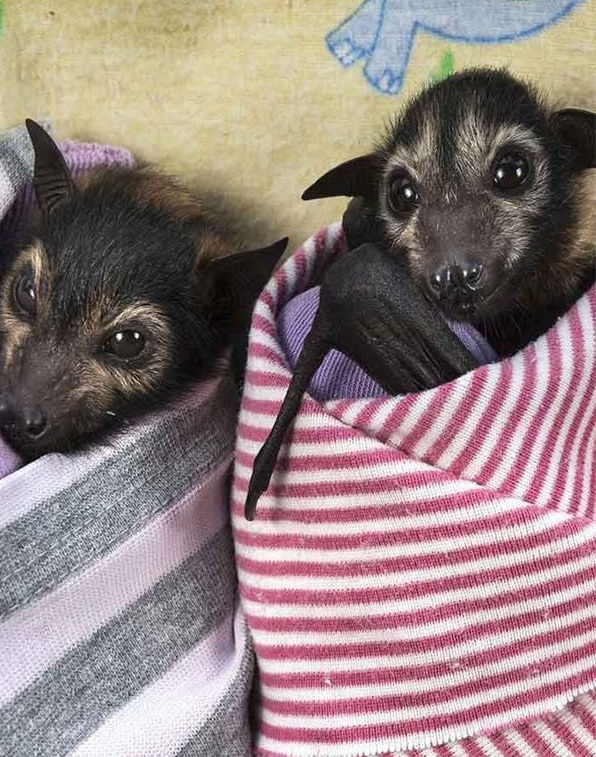 place where orphaned baby bats get second chance 12 pics 7