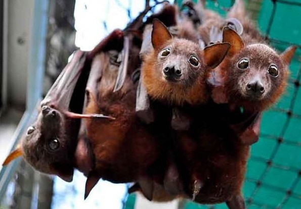 place where orphaned baby bats get second chance 12 pics 9