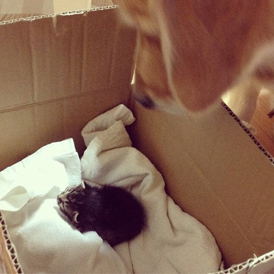 ponzu the father of kittens 11 pics 2