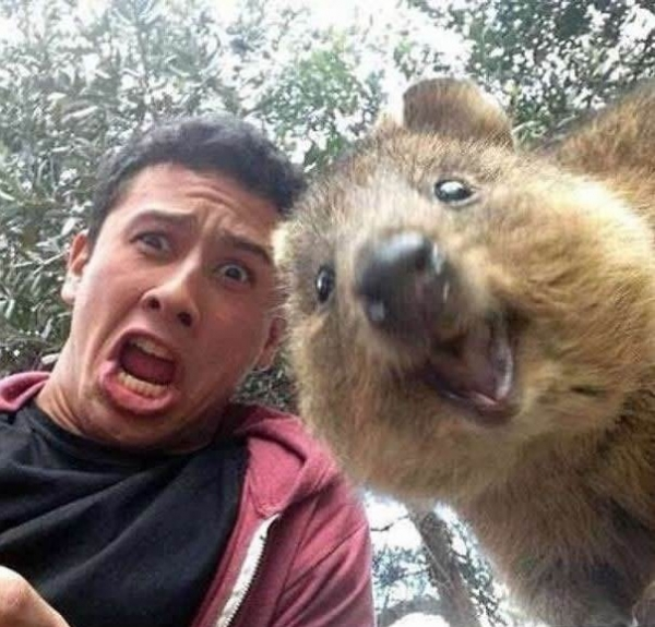 quokka selfies are definitely the most adorable new trend in australia 15 pics 1