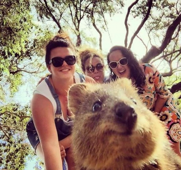quokka selfies are definitely the most adorable new trend in australia 15 pics 11