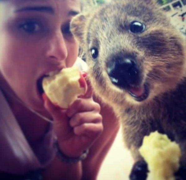 quokka selfies are definitely the most adorable new trend in australia 15 pics 12