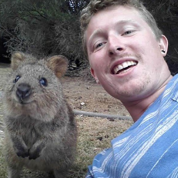 quokka selfies are definitely the most adorable new trend in australia 15 pics 14