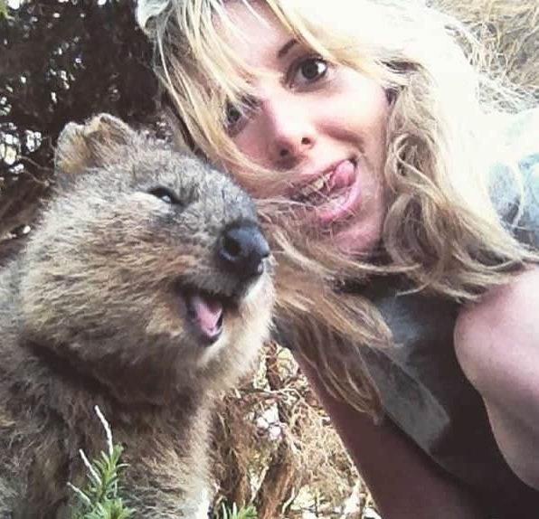 quokka selfies are definitely the most adorable new trend in australia 15 pics 2