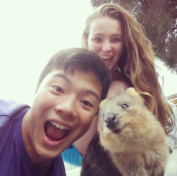 quokka selfies are definitely the most adorable new trend in australia 15 pics 4
