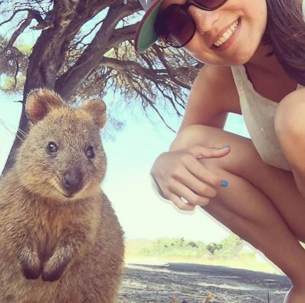 quokka selfies are definitely the most adorable new trend in australia 15 pics 6