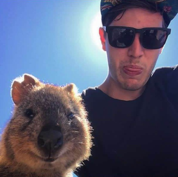 quokka selfies are definitely the most adorable new trend in australia 15 pics 8