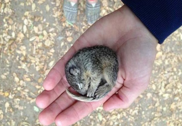 saving private squirrel story of heartwarming rescue told in 13 pics 1