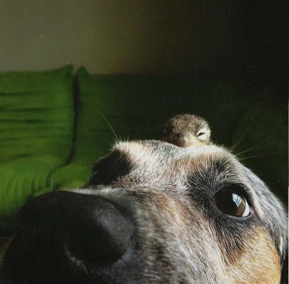 saving private squirrel story of heartwarming rescue told in 13 pics 10