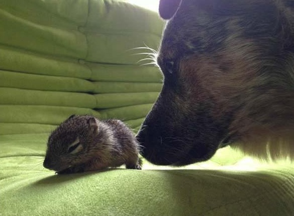 saving private squirrel story of heartwarming rescue told in 13 pics 11