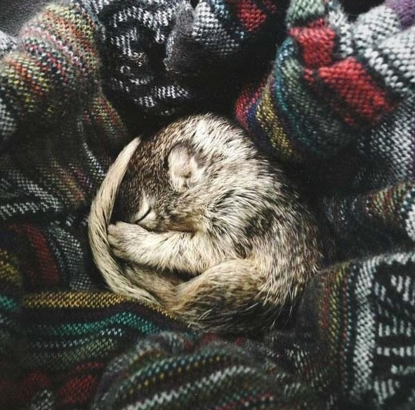 saving private squirrel story of heartwarming rescue told in 13 pics 2