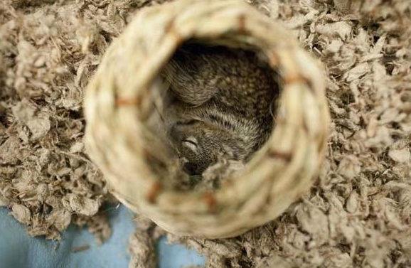 saving private squirrel story of heartwarming rescue told in 13 pics 3