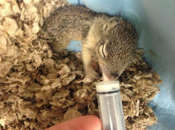 saving private squirrel story of heartwarming rescue told in 13 pics 4