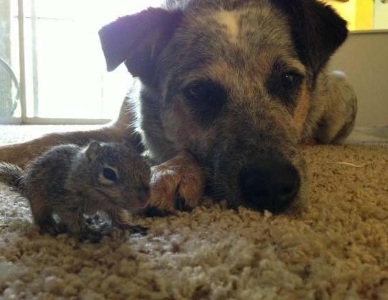 saving private squirrel story of heartwarming rescue told in 13 pics 7