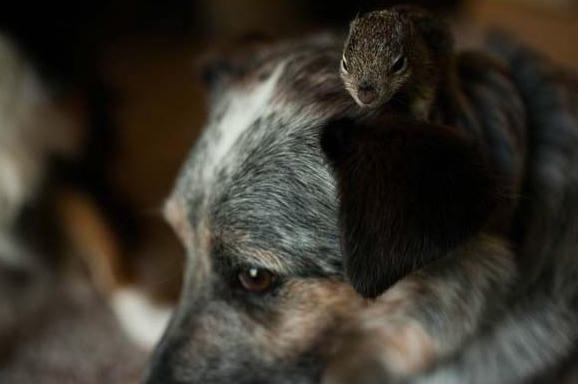 saving private squirrel story of heartwarming rescue told in 13 pics 8