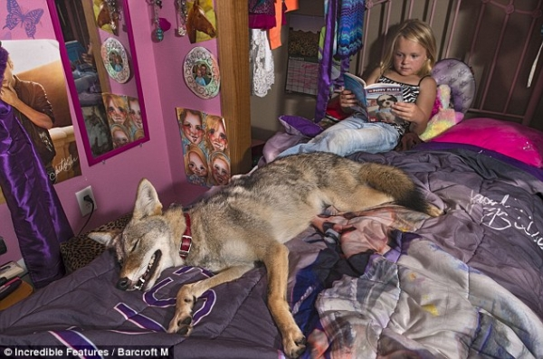 sharing bed with a coyote 7