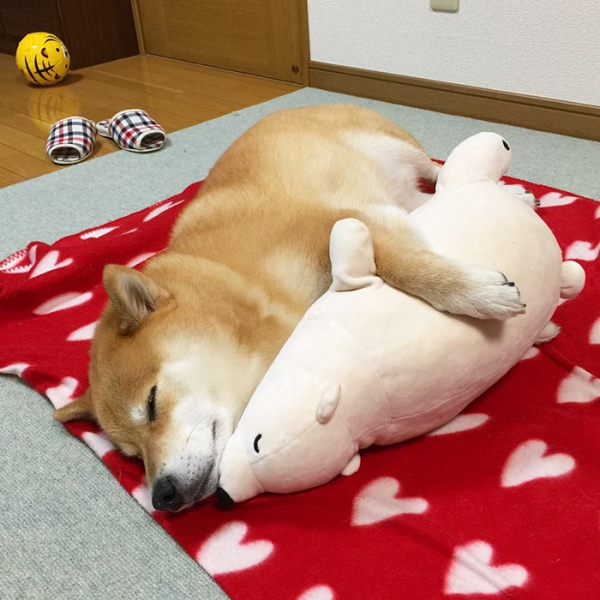 sharing sweet dreams with his toy 11 pics 3
