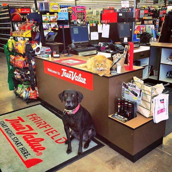 silly cats of bodega stores 12 pictures 10