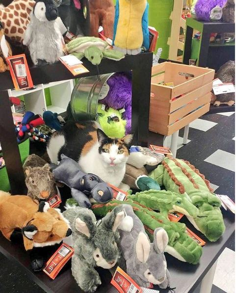 silly cats of bodega stores 12 pictures 11