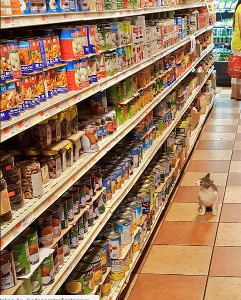 silly cats of bodega stores 12 pictures 5