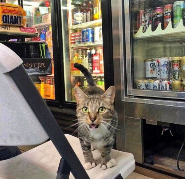 silly cats of bodega stores 12 pictures 8