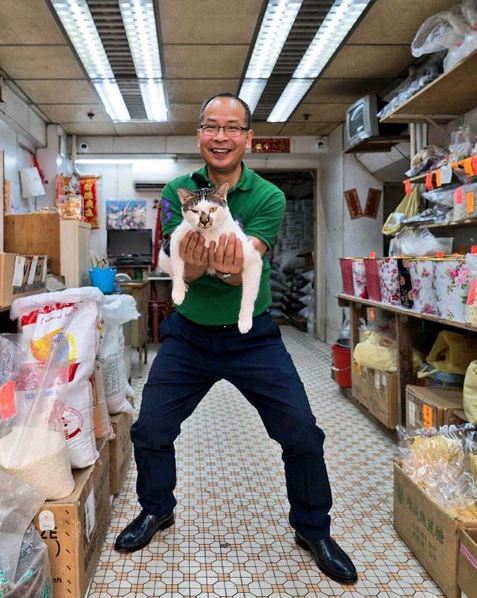 silly cats of bodega stores 12 pictures 9