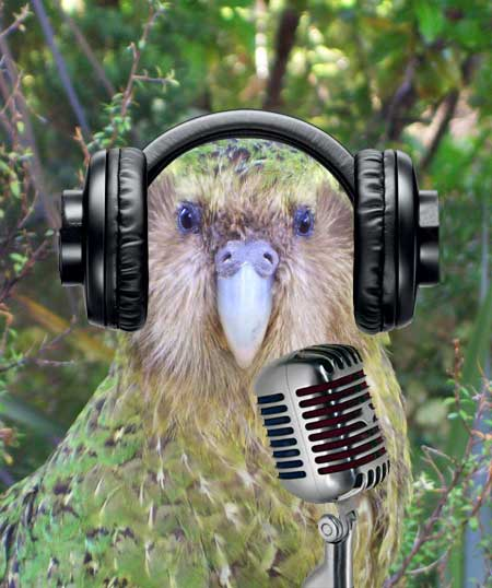 sirocco the kakapo is a parrot superstar 5 pics 4 videos 4