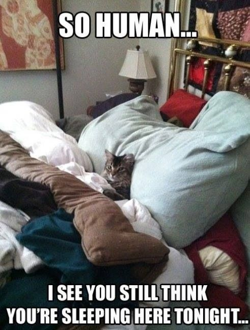 sleeping with your pet yes or no 17 pictures 11