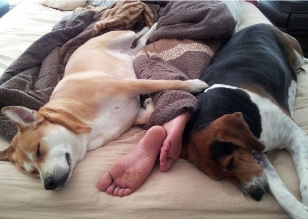 sleeping with your pet yes or no 17 pictures 12