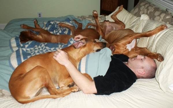 sleeping with your pet yes or no 17 pictures 14
