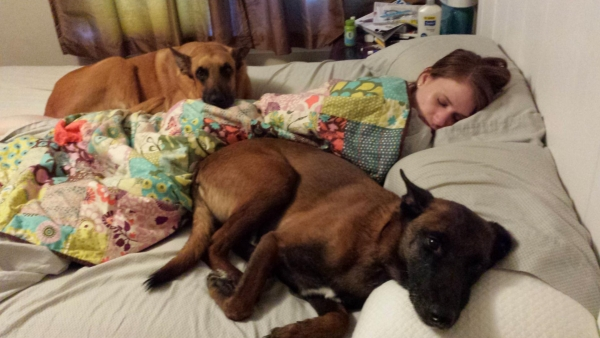 sleeping with your pet yes or no 17 pictures 15