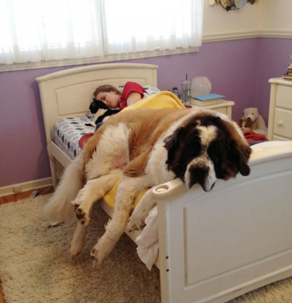 sleeping with your pet yes or no 17 pictures 17