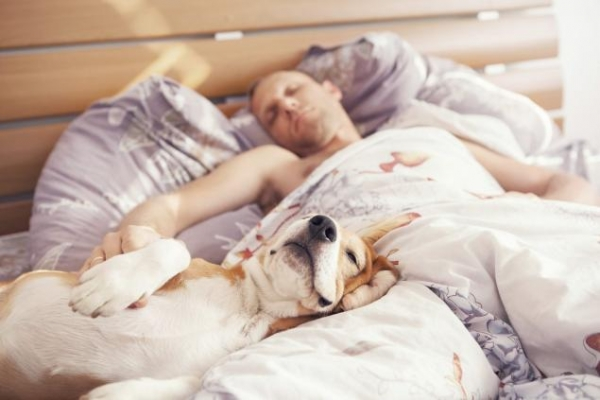 sleeping with your pet yes or no 17 pictures 2