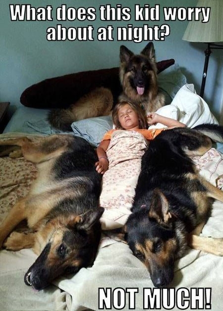 sleeping with your pet yes or no 17 pictures 9